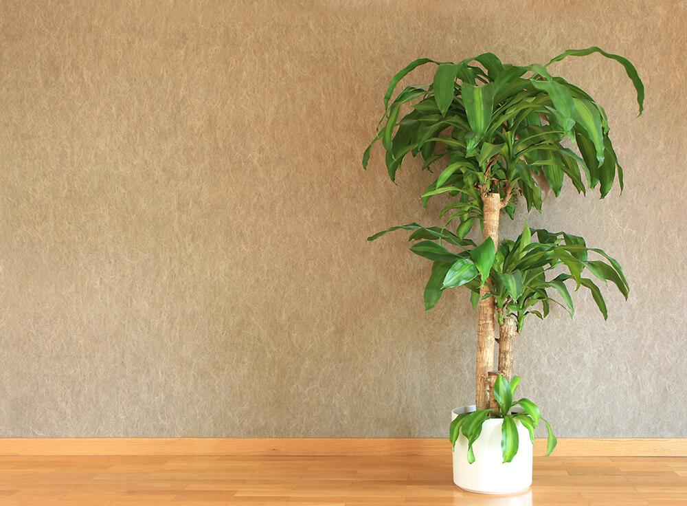 piante autunnali da balcone