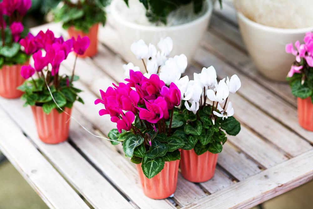 piante autunnali da esterno