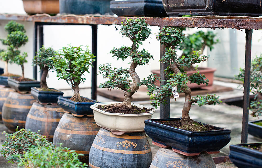 piante autunnali da giardino