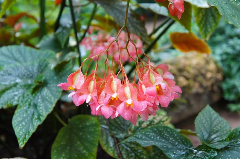 piante autunnali fiorite